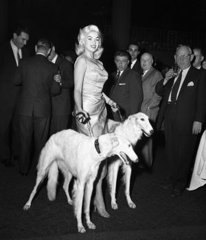 Jayne Mansfield with Seagrams Dogs