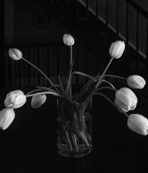 Tulips In Vase by