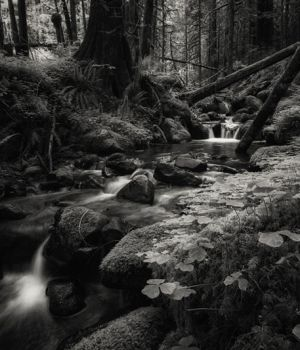 Secret Forest by
