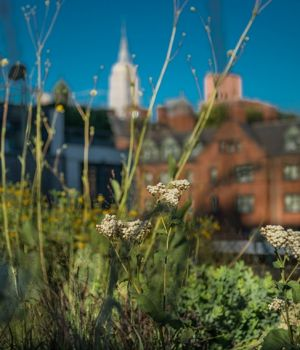 View from the Highline by