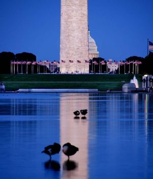 Reflecting Pool by