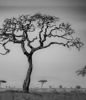 The Namiri Tree by
