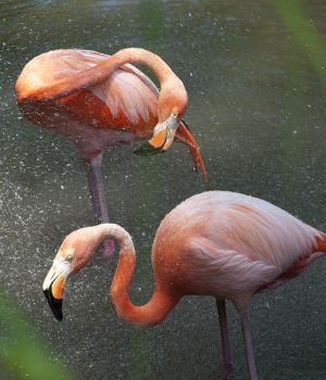 Flamingos in Mist, New York 2012 by