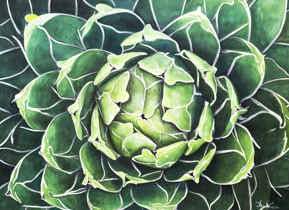Victoria Agave by Patrick Faure